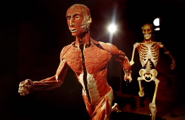 Body Worlds in Rome